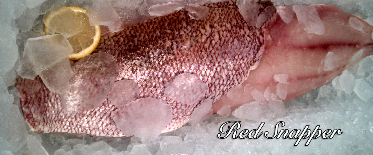 redsnapper-banner